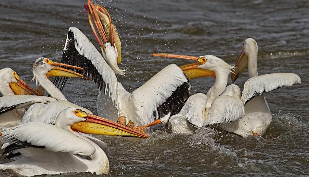 Какие птицы обитают на лугу Птицы луга