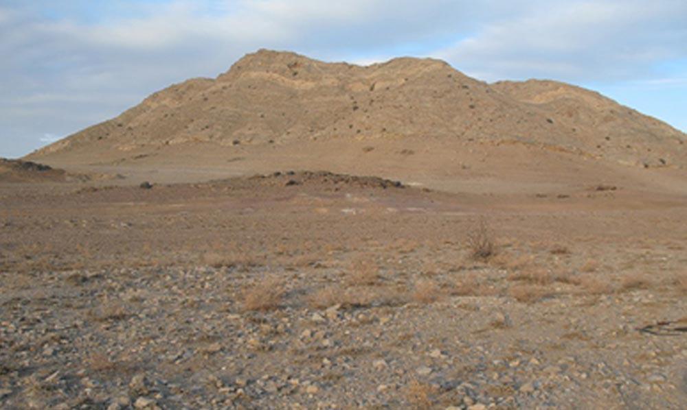 Пищевая цепь пустыни пример  как составить